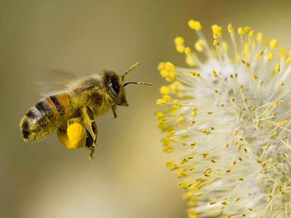 Μελισσογύρη, μια πλήρης φυσική τροφή