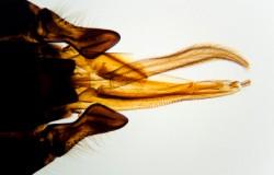 iStock microscopy